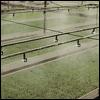 Irrigazione a guastapaglia for Irrigazione per aspersione